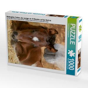 CALVENDO Puzzle Mutterglück: Fohlen, das weniger als 10 Stunden