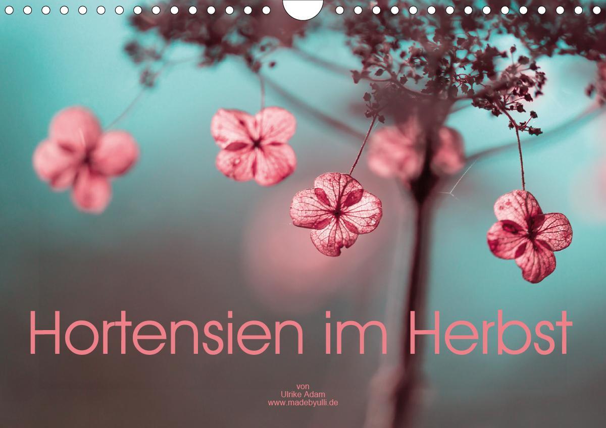 Hortensien im Herbst (Wandkalender 2021 DIN A4 quer)