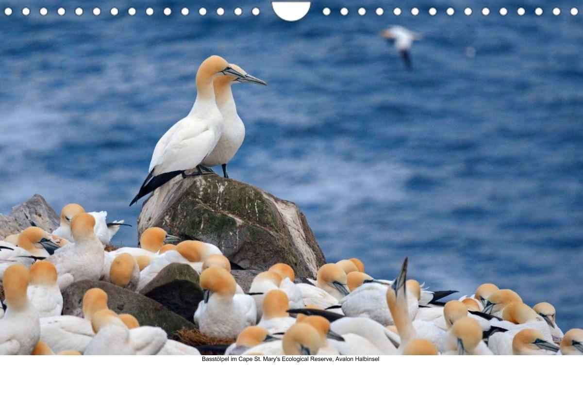 Neufundland 2021 (Wandkalender 2021 DIN A4 quer)