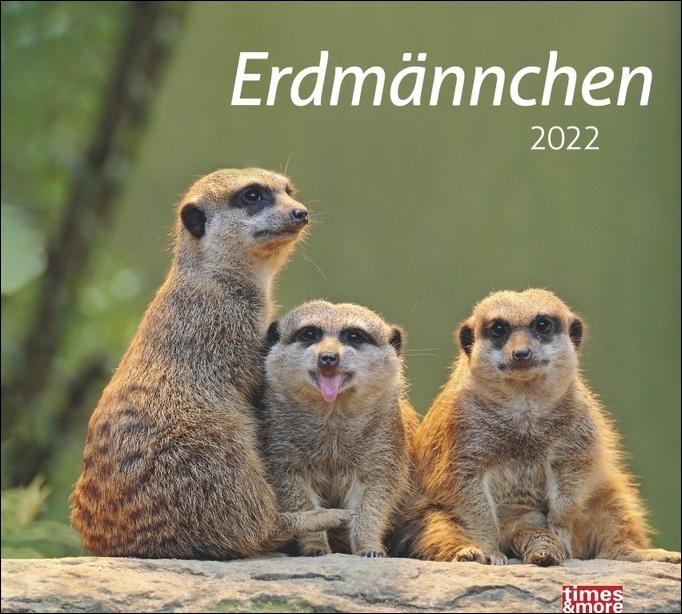 times&more Erdmännchen Bildkalender 2022