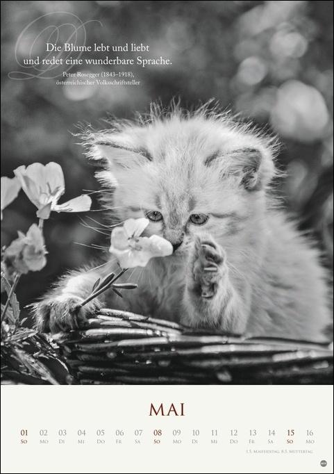 Katzen - Ein literarischer Spaziergang Kalender 2022