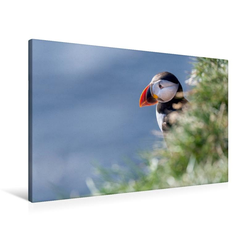 Premium Textil-Leinwand 90 cm x 60 cm quer Papageitaucher (Puffi