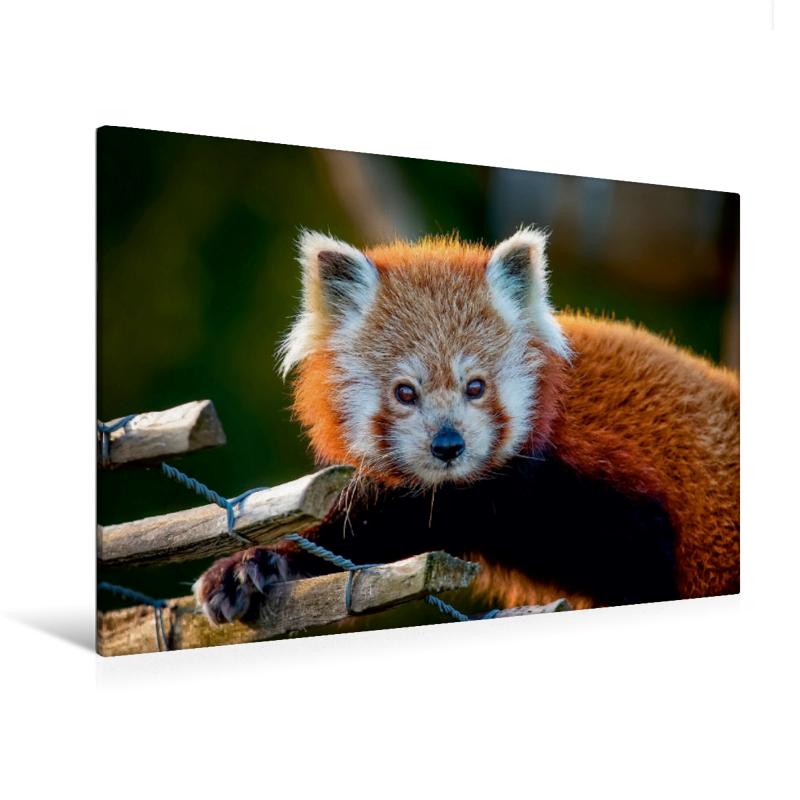 Premium Textil-Leinwand 120 cm x 80 cm quer Kleiner Panda