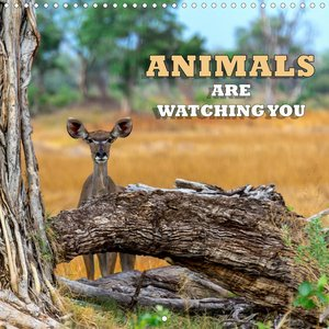 Animals are watching you (Wall Calendar 2021 300 × 300 mm Square