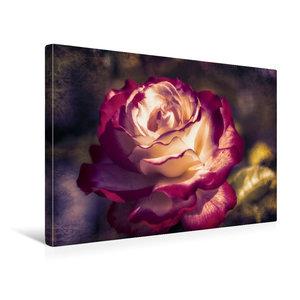 Premium Textil-Leinwand 45 cm x 30 cm quer Weiss rote Rosenbl?te mit Textur