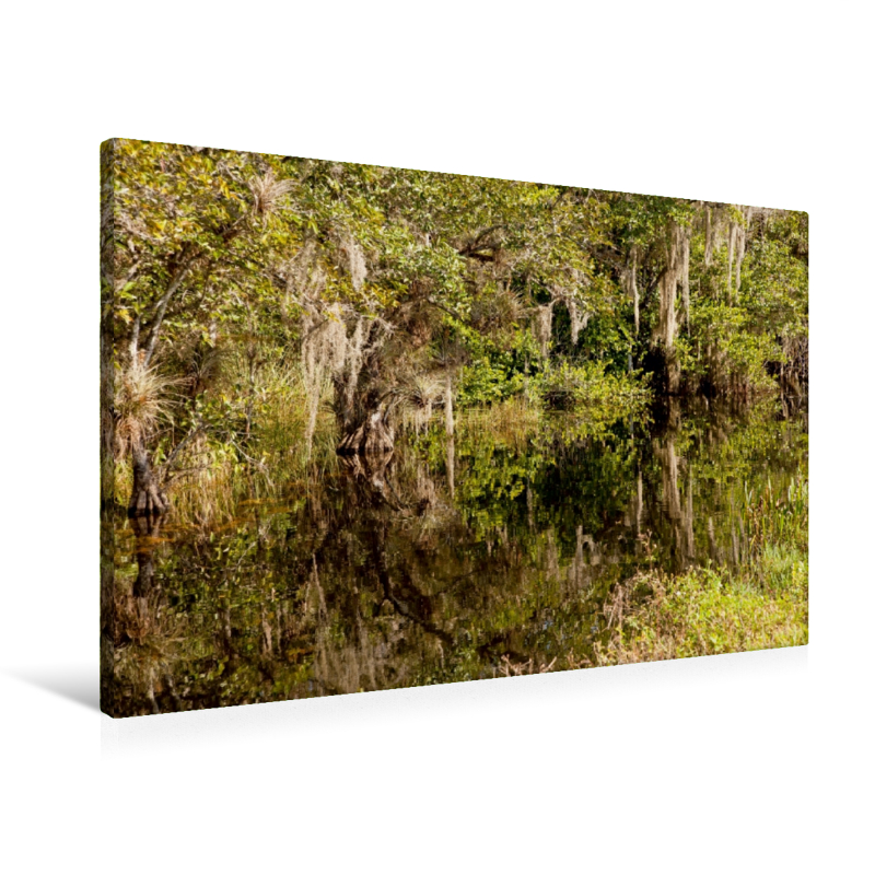 Premium Textil-Leinwand 90 cm x 60 cm quer Everglades - Big Cypr