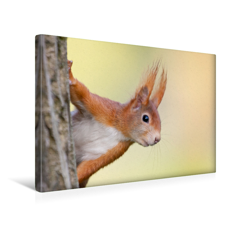 Premium Textil-Leinwand 45 cm x 30 cm quer Eichhörnchen