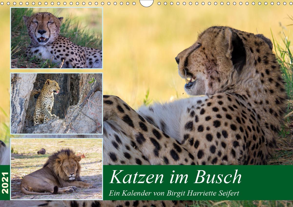 Katzen im Busch (Wandkalender 2021 DIN A3 quer)
