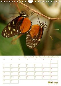 Zarte Schönheiten Tropische Schmetterlinge (Planer) (Wandkalender 2022 DIN A4 hoch)