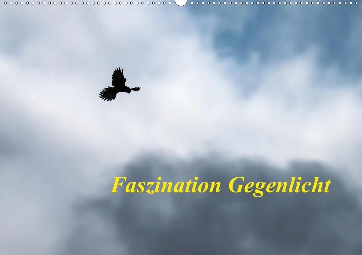 Faszination Gegenlicht (Wandkalender 2021 DIN A2 quer)