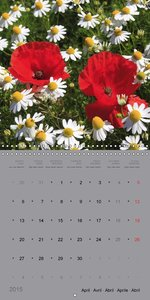 Beauty of flowers (Wall Calendar 2015 300 × 300 mm Square)