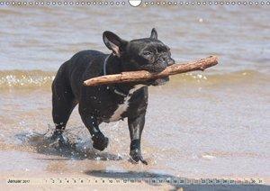 Bulldoggen - Englische und Französische Bulldoggen