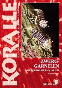 Art für Art: Zwerggarnelen im Meerwasseraquarium