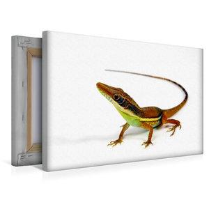 Premium Textil-Leinwand 45 cm x 30 cm quer Hendersons Anolis - A