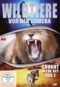 Wildtiere Vor Der Kamera-Caught In The Act (Teil 1