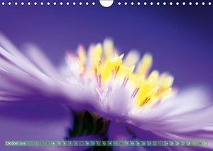 Wunderwelt der Blüten (Wandkalender 2016 DIN A4 quer)