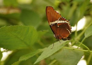 Delicate Beauties Exotic Butterflies (Poster Book DIN A4 Landsca