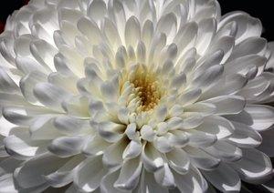 Blüten im Fokus - Blumen Impression (Posterbuch DIN A3 quer)
