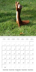 Squirrel in the park (Wall Calendar 2015 300 × 300 mm Square)
