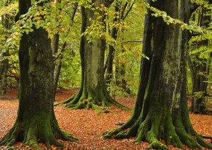 Waldspaziergang (Posterbuch DIN A3 quer)