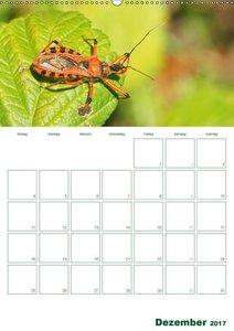Falter, Grillen, Spinnen: Faszinierende Insekten / Planer