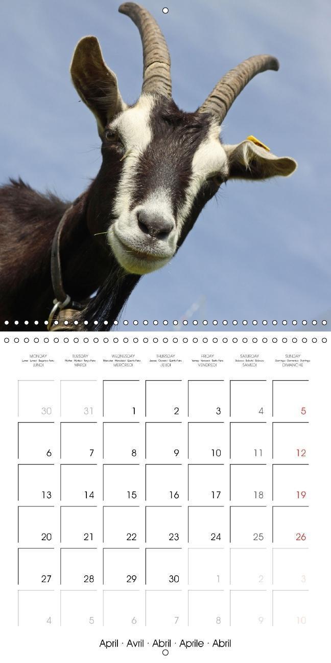Goats of Switzerland (Wall Calendar 2015 300 × 300 mm Square) - zum Schließen ins Bild klicken