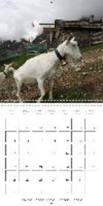 Goats of Switzerland (Wall Calendar 2015 300 × 300 mm Square)