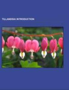 Tillandsia Introduction