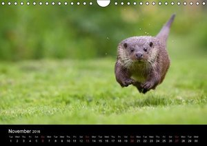 British Wildlife 2016 (Wall Calendar 2016 DIN A4 Landscape)