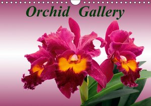 Orchid Gallery (Wall Calendar 2015 DIN A4 Landscape)