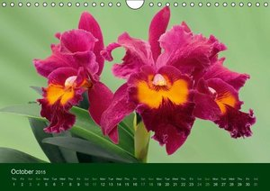 Orchid Gallery (Wall Calendar 2015 DIN A4 Landscape)