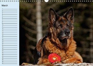 German Shepherd / Birthday Calendar (Wall Calendar perpetual DIN