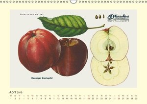 M. Laube, L: Alte Apfelsorten für Allergiker (Wandkalender 2