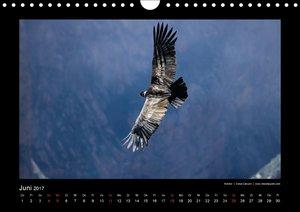Peru 2017 Im Land des Kondors
