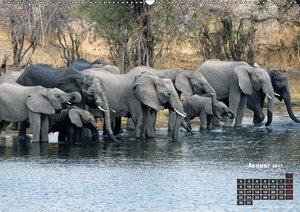 begegnungen - elefanten im südlichen afrika