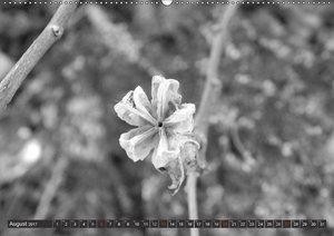 Schönheit der Blüten