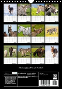 Süße Esel. Langohren zum Verlieben (Wandkalender 2016 DIN A4 hoc