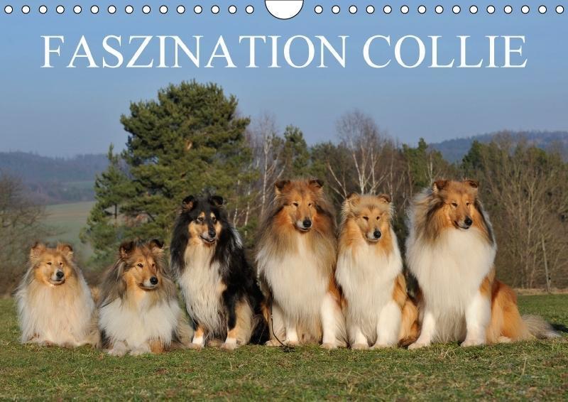 Faszination Collie 2018 - zum Schließen ins Bild klicken