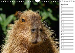 Faszinierende Tierportraits (Wandkalender 2016 DIN A4 quer)