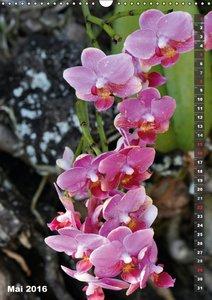 Wilde Flora - Hawaii (Wandkalender 2016 DIN A3 hoch)