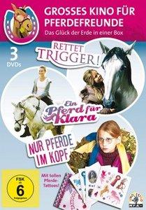 Grosses Kino für Pferdefreunde