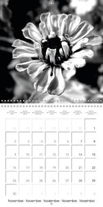 Floral Contrasts in Black and White (Wall Calendar 2015 300 × 30