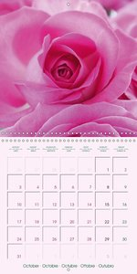 Roses Very Close (Wall Calendar 2016 300 × 300 mm Square)