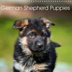 German Shepherd Puppies (Wall Calendar 2015 300 × 300 mm Square)
