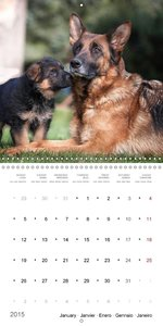 German Shepherd Puppies (Wall Calendar 2015 300 × 300 mm Square)