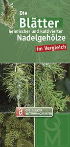 Die Blätter heimischer und kultivierter Nadelgehölze im Vergleic