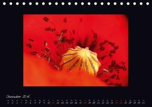 MOHNographie (Tischkalender 2016 DIN A5 quer)