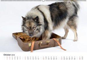 Der Wolfsspitz (Wandkalender 2016 DIN A2 quer)