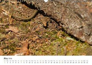 Wild North Karelia (Wall Calendar 2016 DIN A3 Landscape)