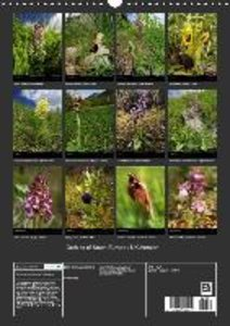 Orchids of South Europe 2015 / UK-Version (Wall Calendar 2015 DI